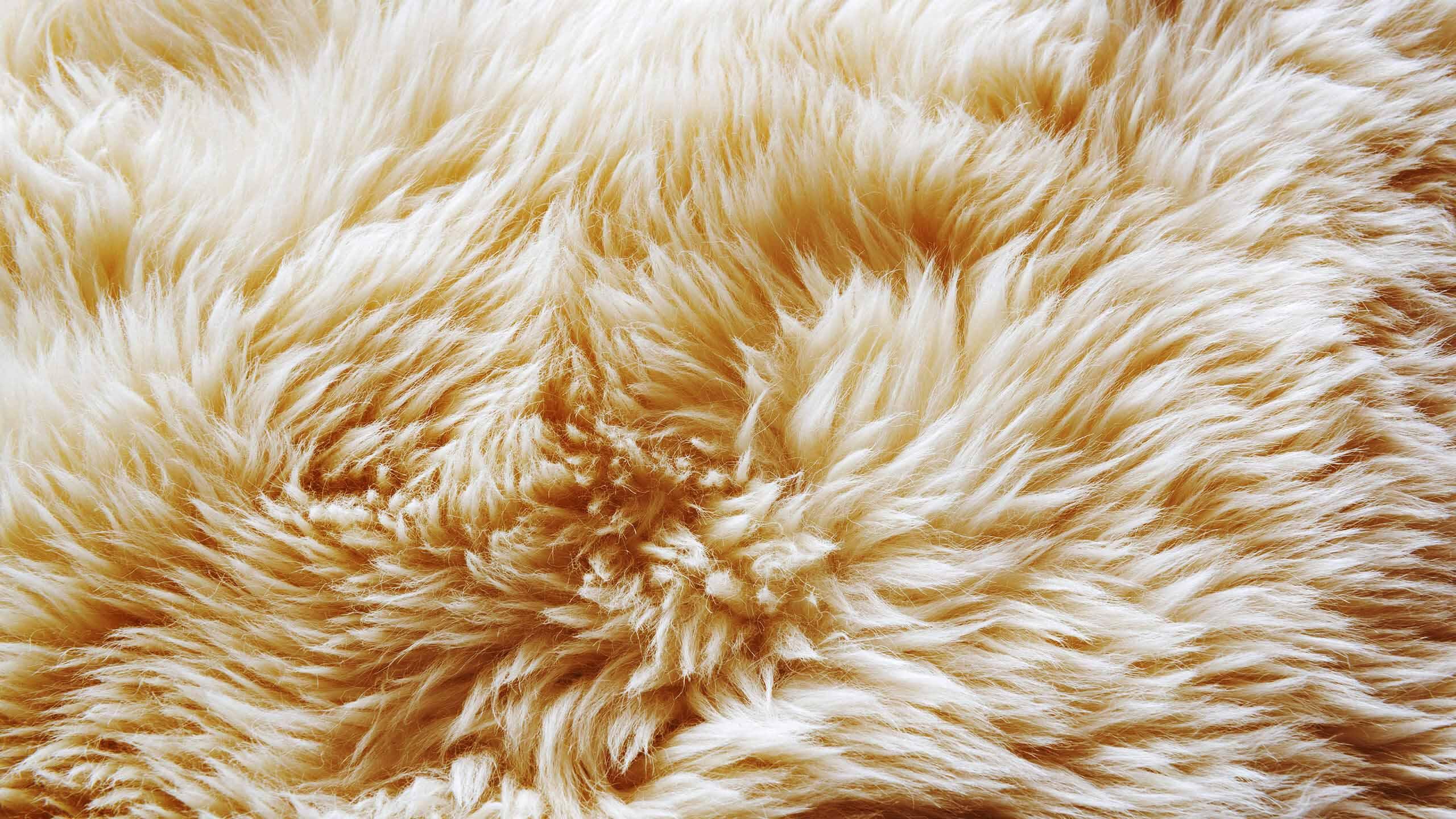 21204b7c9 Jesteśmy producentem skór owczych | KalSkór - 30 lat doświadczenia!
